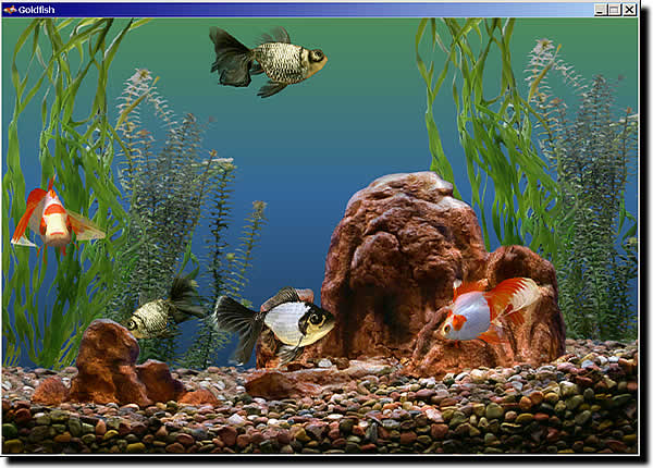 planted goldfish tank. planted goldfish tank.