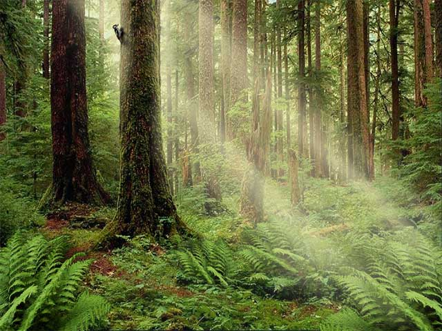 The Serenity Forest Screensaver is developed to create this wonderful ...